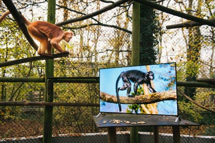 sony_televisiones-4k_lemures