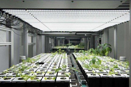 atos_agricultura-urbana-digital-vertical.jpg