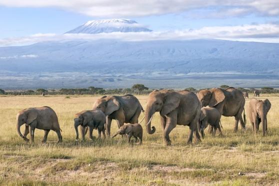 microsoft_ia-elefantes.jpg
