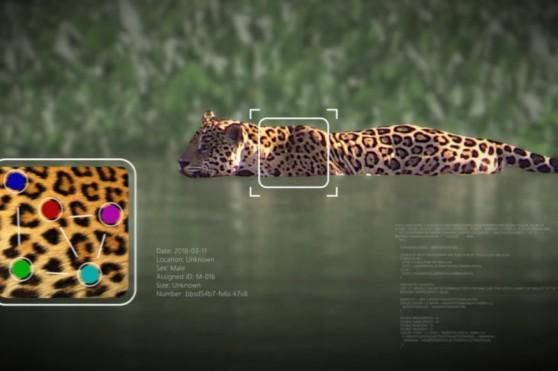 microsoft_wild-me-ia.jpg