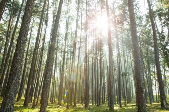atos_bosques.jpg